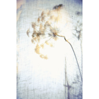 """""""Lacy Flower Photo Poster Print"""""""