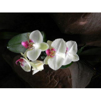Pretty white orchids sympathy or thank you