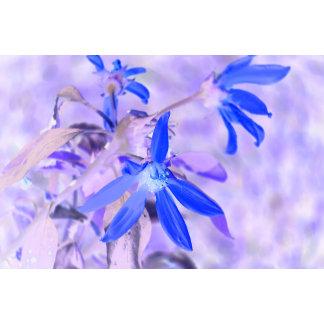 blue flower purple back invert