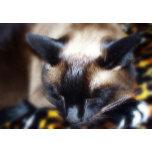 Let Sleeping Cats Lie.JPG