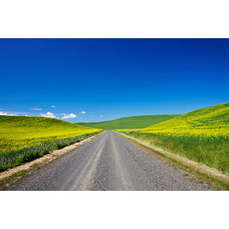 Backcountry road through Spring Canola Fields