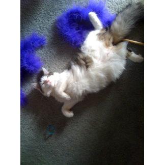 Happy Kitten and Her Boa