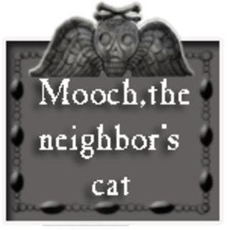 mooch,the neighbor's cat