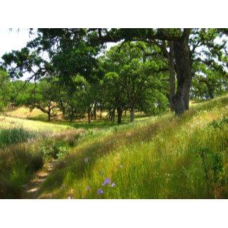 Oak Tree Woodlands: Meadows, Farms, Lakes