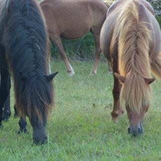 Assateague / Chincoteague Island pony gifts.
