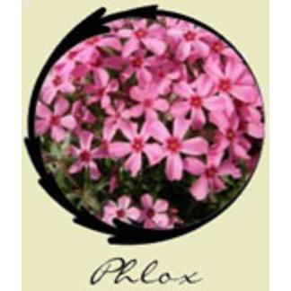 Pink Phlox Gifts