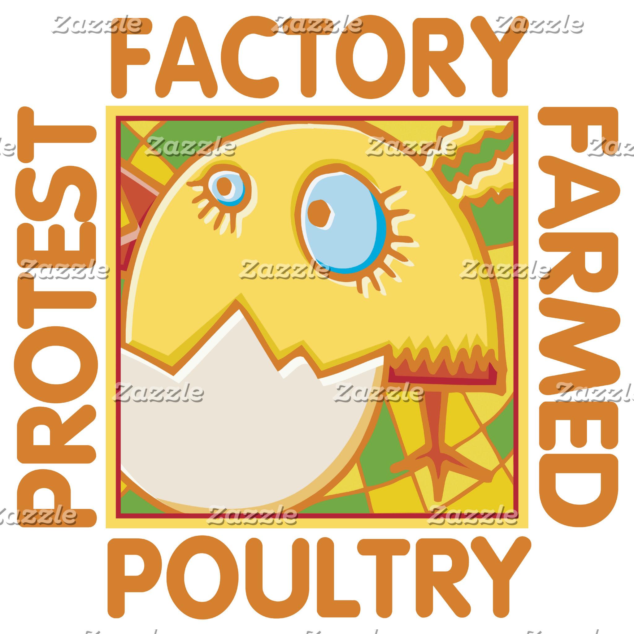 Factory Farm Poultry