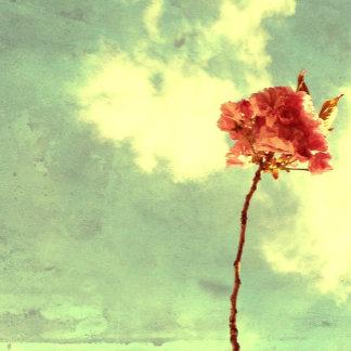 Brooklyn Blossom