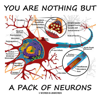 You Are Nothing But A Pack Of Neurons (Synapse)