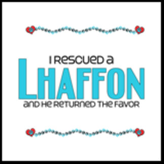 I Rescued a Lhaffon (Male Dog)