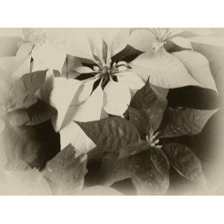 Antiqued Poinsettias