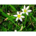 whitesflowers3.jpg