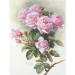 Paul_de_Longpré_-_Roses_and_Bumblebees,_1899.jpg