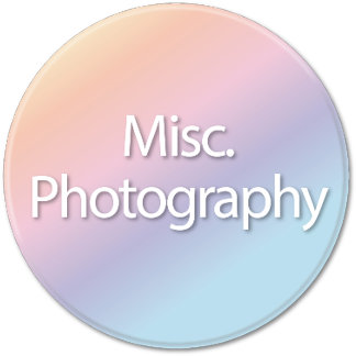 Misc. Photography