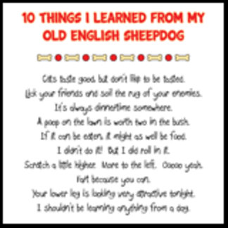 Things I Learned From My Old English Sheepdog Joke