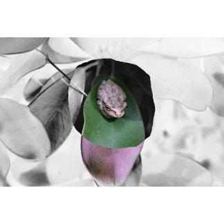 Frog on circle green leaf bw
