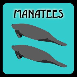 Manatee Mania!