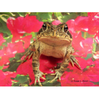 Florida toad standing up bougainvillea pink back