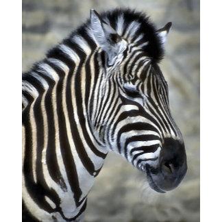 Zebra Lovers