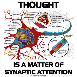 Thought Is A Matter Of Synaptic Attention (Neuron)