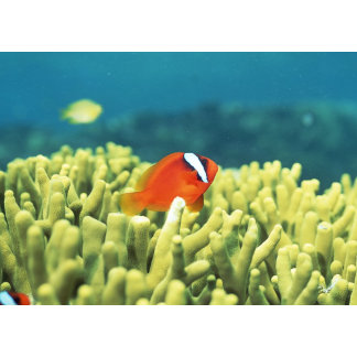 Coral reef teeming with tropical fish