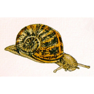 Snails / Shells