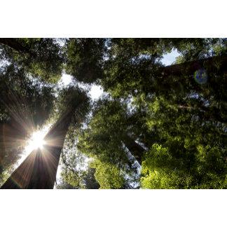 Redwoods, Humboldt Redwoods State Park