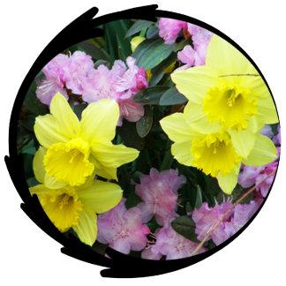 Daffodil/Narcissus Photo
