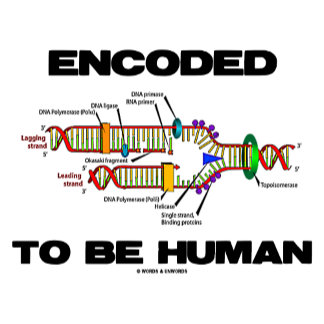 Encoded To Be Human (DNA Replication)