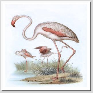 BIRDS D - F
