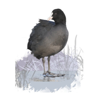 Old Coot