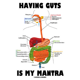Having Guts Is My Mantra (Digestive System)