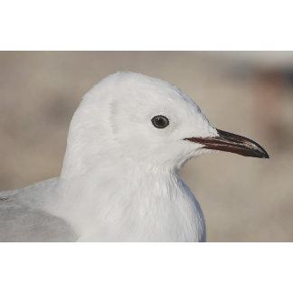 ~ Seagull, Ocean, Pelagic Birds