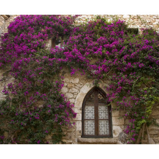 France, Provence, Eze. Bright pink