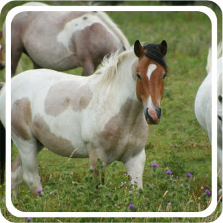 Clipped Paint Horse