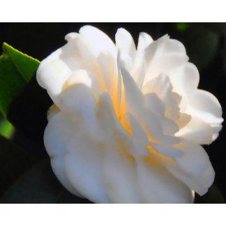 Magnolia Light