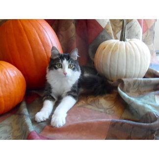 Anakin & Pumpkins