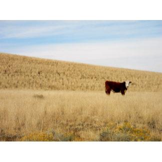 Babbitt Cattle