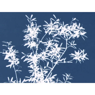 Blue back white leaf grass graphic outline picture
