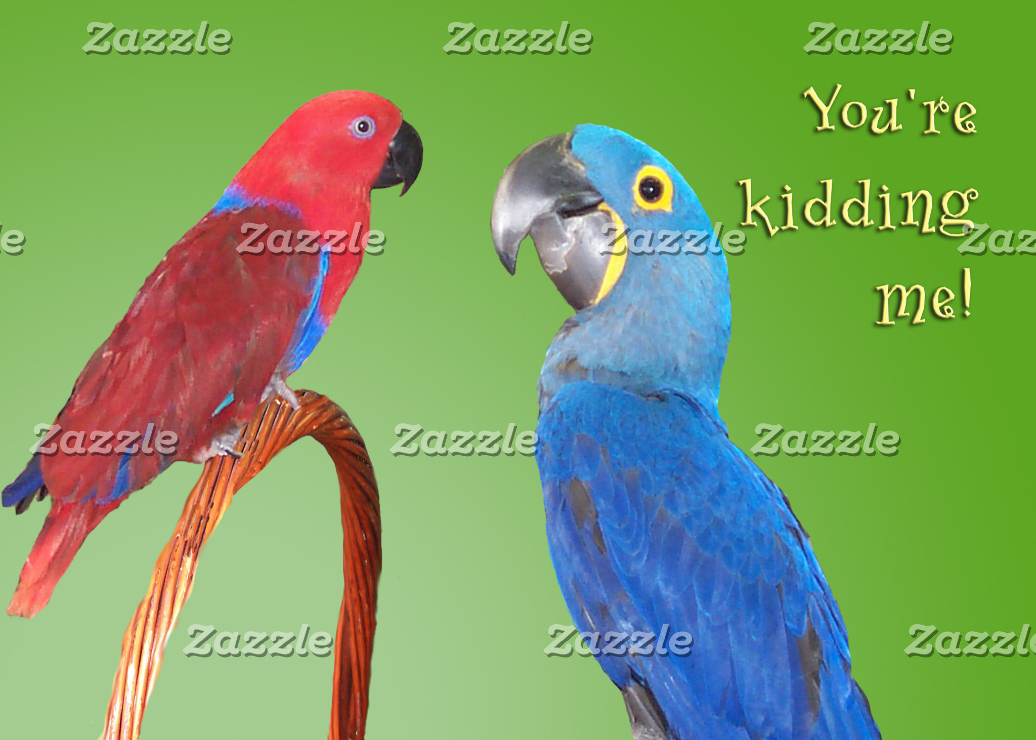 Multiple Parrot Species