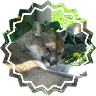 Resting Cougar