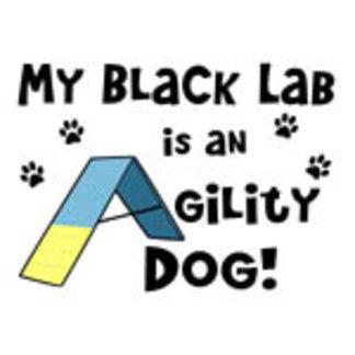 My Black Lab is an Agility Dog