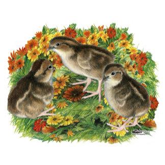 Bobwhite Garden Chicks