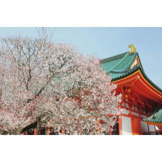 Japan, Kyoto. Cherry blossom of Shinto