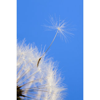 """""""Dandelion Seed Fly Away Photo Poster Print"""""""
