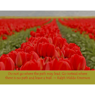 Field of Red Tulips with Inspirational Quote