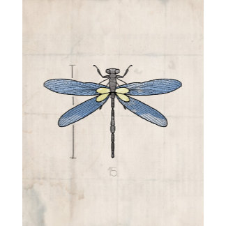 Insect Series | Dragonfly