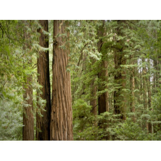 Muir Woods National Monument, Northern