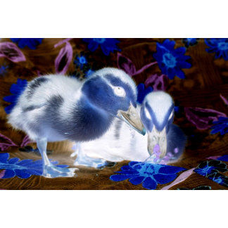 Spooky blue and white baby ducks