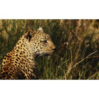 * Leopard big cats